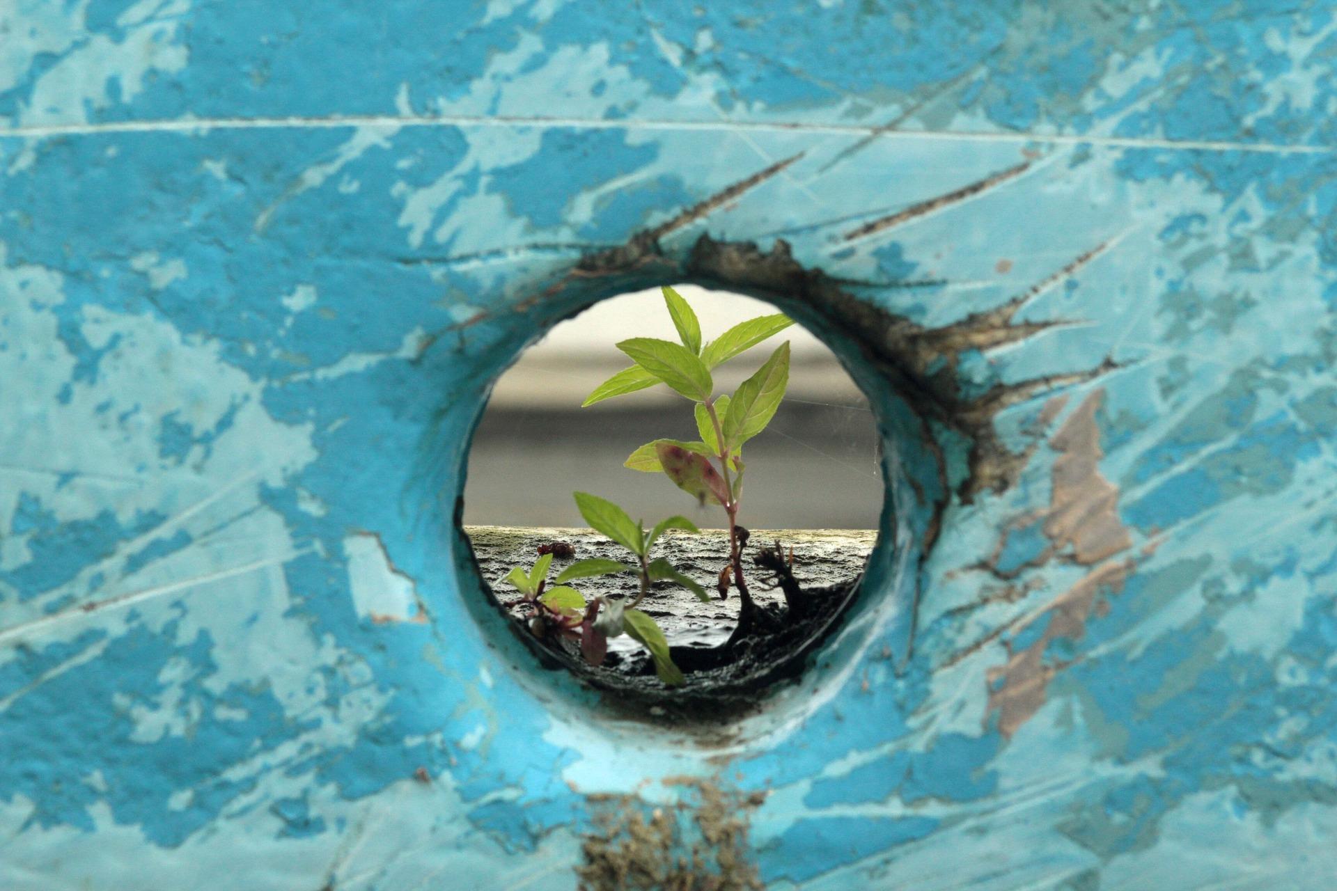 Costruire la propria resilienza: riorganizzarsi positivamente